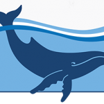 australian marine conservation society, whale